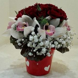 Picture of Arrangement Willy