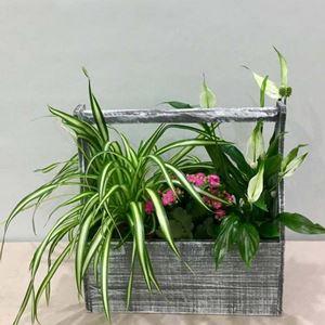 Picture of Plants Arrangement Small Garden