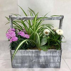 Picture of Plants Arrangement Vintage