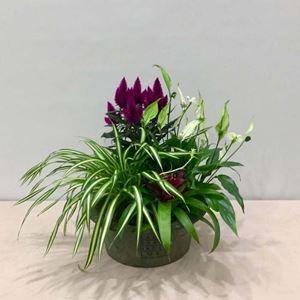 Picture of Plants Arrangement 0021