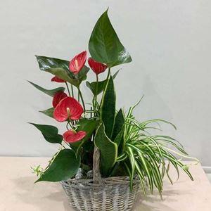 Picture of Plants Arrangement Oasis