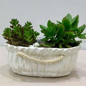 Picture of Succulent Arrangement 013