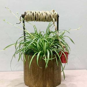 Picture of Succulent Arrangement Well
