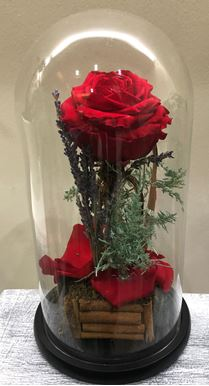 Picture of Forever Rose red medium size