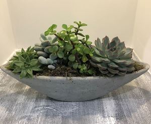 Picture of Succulent Arrangement