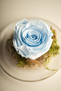 Picture of Forever Rose Light Blue Small