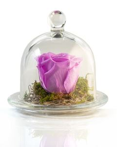 Picture of Forever Rose Purple lilac
