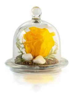 Picture of Forever Rose Yellow Small