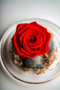 Picture of Forever Rose Red Small