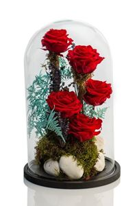 Picture of Forever Rose Red Giant