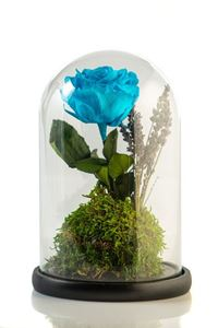 Picture of Beauty & The Beast Turquoise