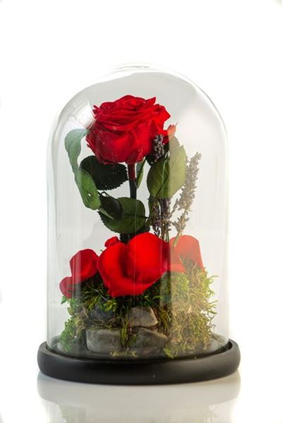 Picture for category GLASSES - BEAUTY AND THE BEAST