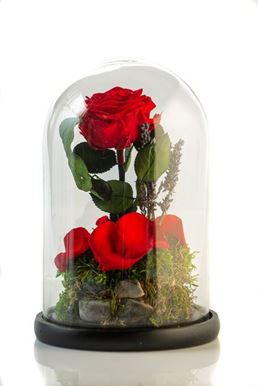 Picture of Beauty & The Beast Red