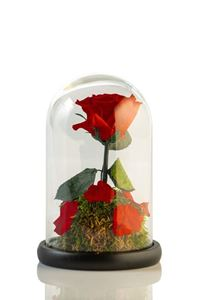 Picture of Beauty & The Beast Red Small